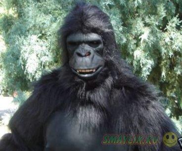 В Испании  ветеринар подстрелил смотрителя, облаченного в костюм гориллы
