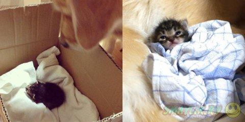 Сладкая парочка: взрослый пес Понзу и маленькая кошечка Ишими