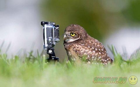 Интересные фотографии животных за неделю
