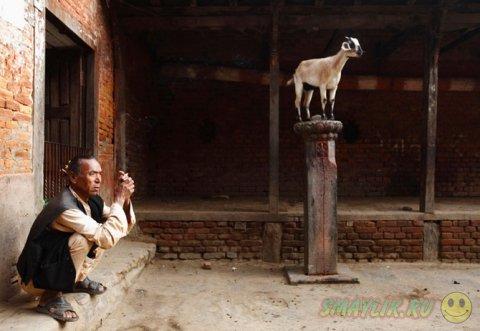Жизни людей и животных неизменно связаны друг с другом