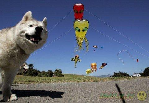 Развлечения, которыми можно украсить собачий досуг