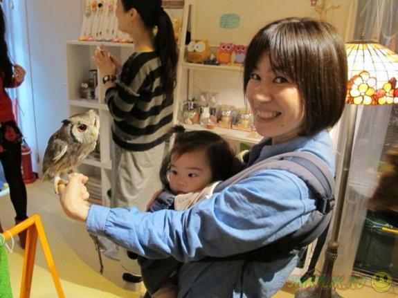 В Токио  открылось «Совиное» кафе