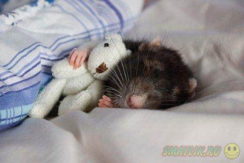 Очаровательные малыши, обнимающие свои мягкие игрушки
