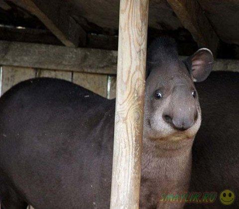 И у животных случаются неудачные фотографии