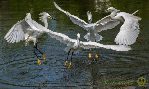 Работы победившие в фотоконкурсе Focus on Nature