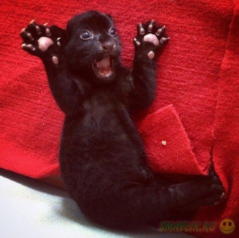 В Китае родился тигренок черного окраса