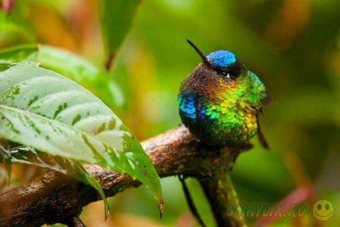 Красота маленькой птички колибри