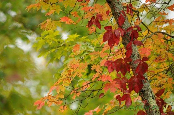 Яркие краски сентября