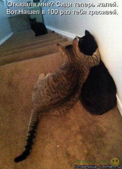 Милые коты для хорошего настроения