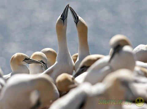 Жизнь животных в фотографиях