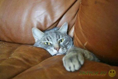 Кошки, свернувшие туда, куда не следовало бы