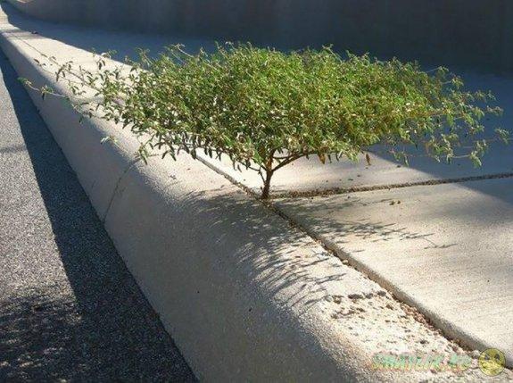 Растения, выжившие несмотря на все трудности