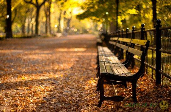 Прогулка в осенний парк