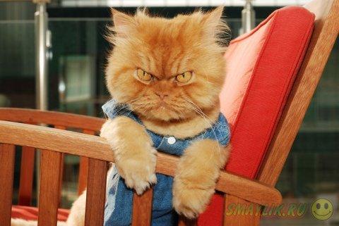 Суровый кот Garfi