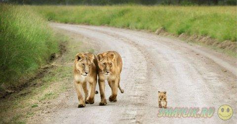 Теплота и забота в семейных портретах животных
