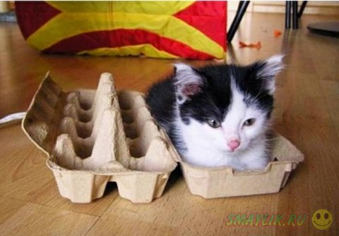 Усатые любители коробок