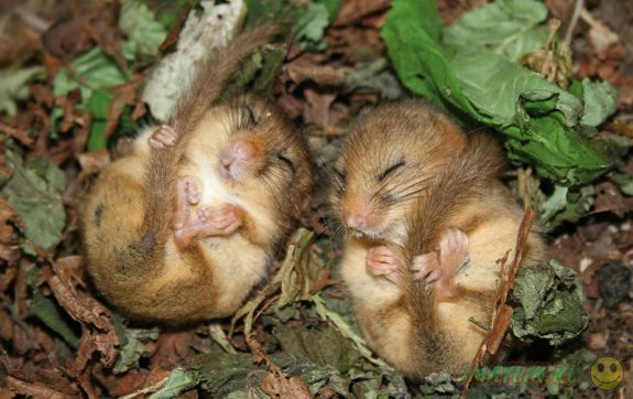Умилительные мышки в дикой природе