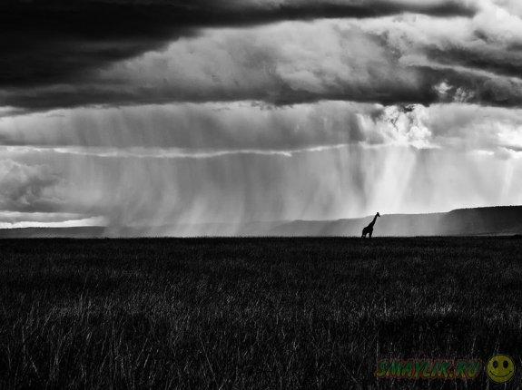 Лучшие фотографии октября от National Geographic