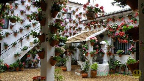 Самый красивый цветочный дворик в испанском городе Кордове