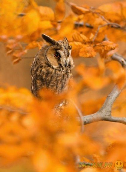 Животные, наслаждающиеся лучиками уходящей осени