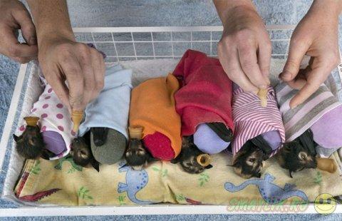 Приют в Австралии для детишек крыланов