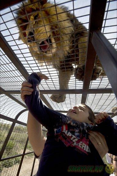 Safari Lion Zoo - зоопарк, где можно дотронуться до льва