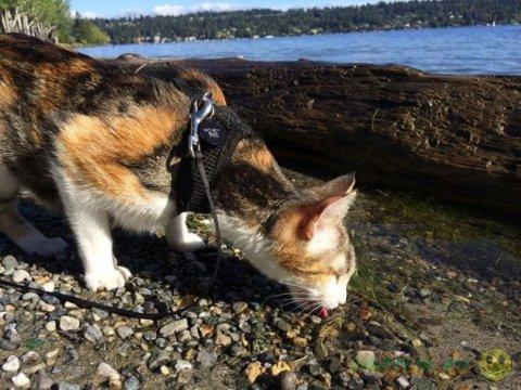 Необычные путешественники - слепая кошка  и ее хозяин