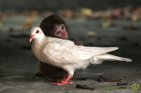 Любовь побеждает все
