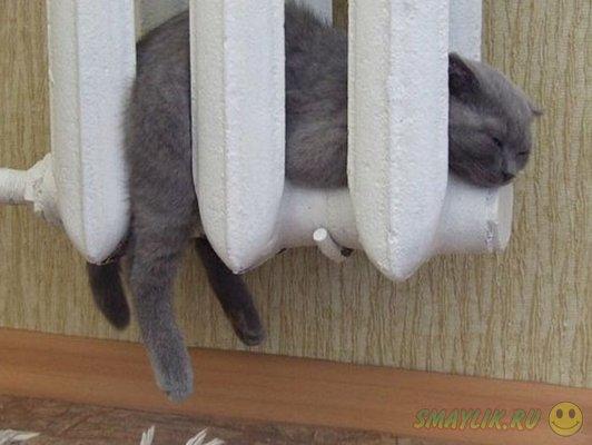 Коты которые так любят греться на батарее