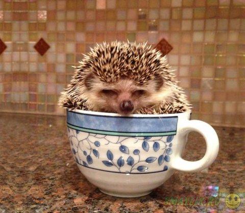 Очаровательные животные в чашках