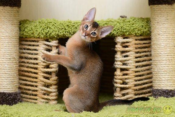 Кошки умеют прятаться в самом неожиданном месте