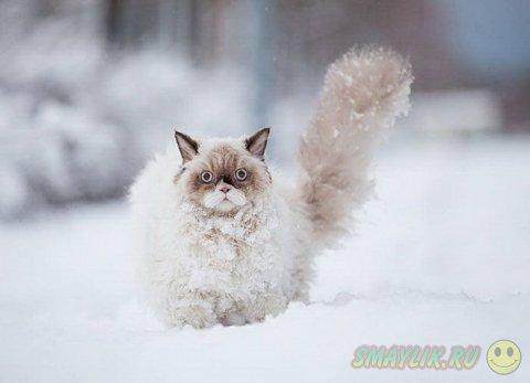 Домашний любимец, впервые увидевший снег