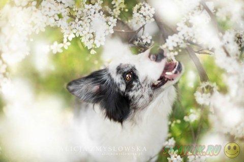 Очень органичные мордашки собак от Алисии Змысловской