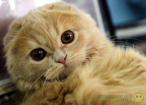 Международная выставка кошек «Гран-при Royal Canin — 2014»