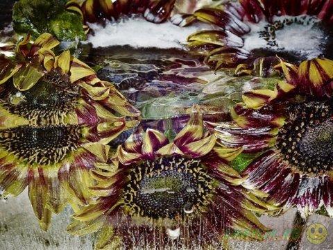 Интерпретация вечной живой красоты в проекте японского художника