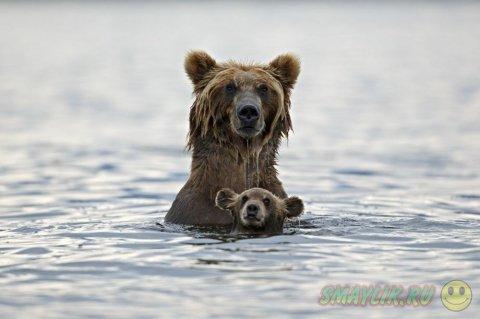 Лучшие снимки за год от National Geographic
