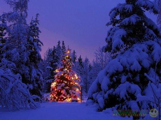 Фотографии, которые подарят вам новогоднее настроение