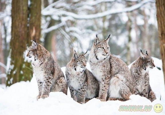 Милые зверята в зимнюю пору