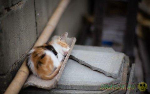 Кошачий рай на острове Тасиро в Японии