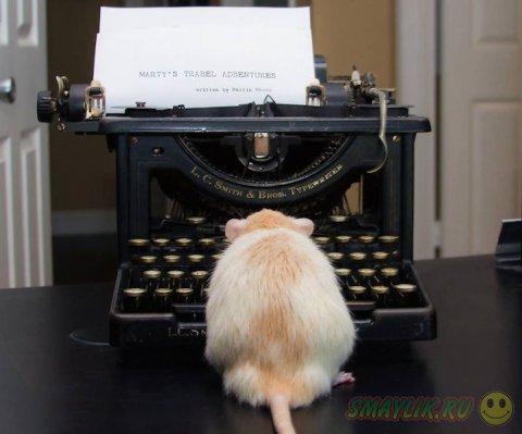 Очаровательная крыска Марти