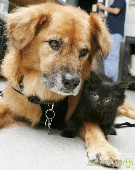 Пес  Бутс стал первой официальной кошачьей няней