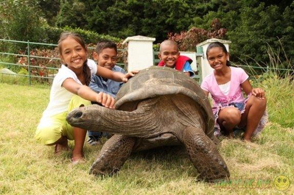 Джонатан — самая старая черепаха в мире