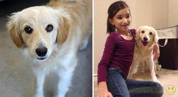 Животные до и после обретения любящих хозяев и нового дома
