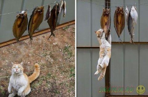 Коты, застигнутые во время преступления