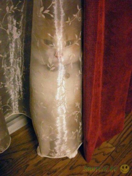 Коты, знающие секреты ниндзя