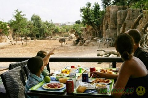 Уникальный зоопарк Bioparc Valencia в столице Левантии