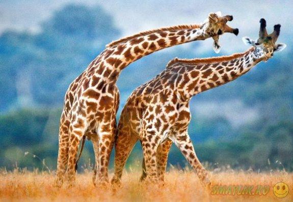 Позитивная фотоколлекция с животными