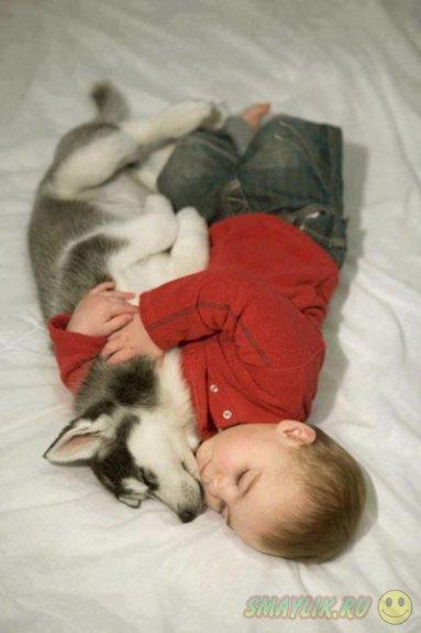 Животные  сделают радостнее жизнь каждой семьи