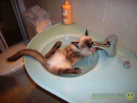Иногда кошки обожают купаться