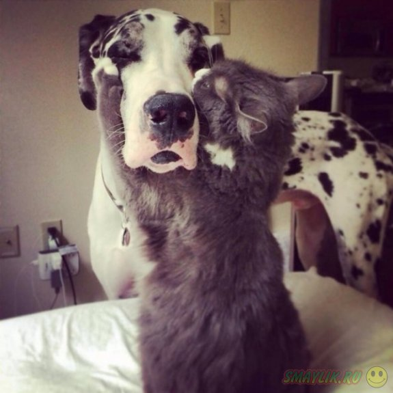 Влюбленные в собак коты